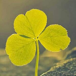绿叶做微信头像
