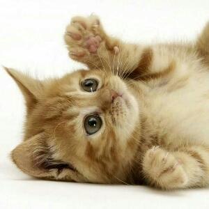 喵喵不是猫