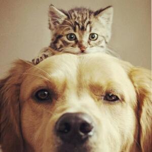 猫笑的图片可爱