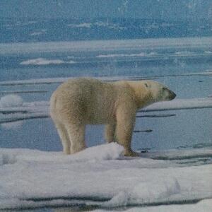孤独的北极熊: 如果你不想下雨