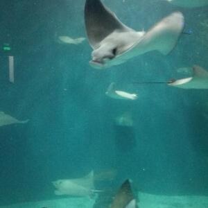 大海鱼图片素材