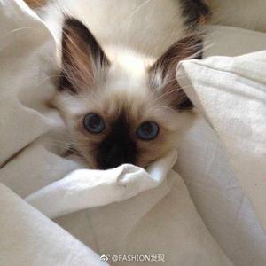 catnancy