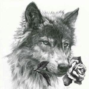 狼人琵琶钢琴谱子
