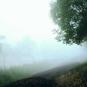 何时雾散尽