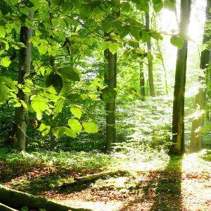 泉水o森林o明月