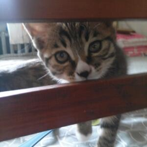 家有猫女初长成
