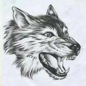 头像优秀作品_狼的头像素描简笔等,最好看的头像狼素描,希望大家图片