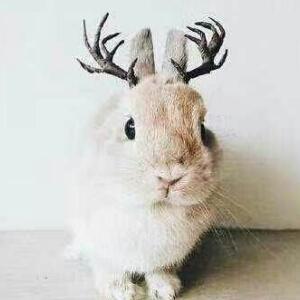 萌动Rabbit