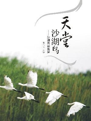 天堂沙湖鸟