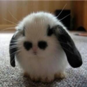 兔子爱吃书