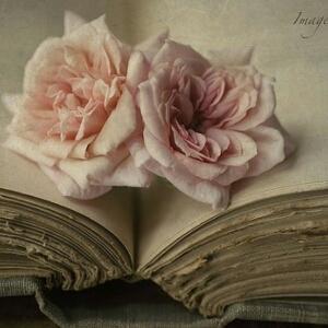 酸奶小妖爱读书
