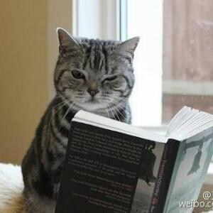 动物读书大全图片