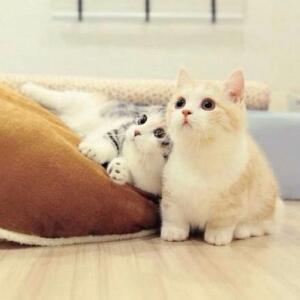 猫咪萌萌哒