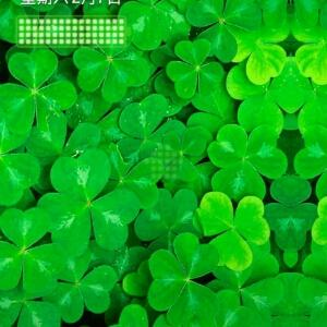 绿绿叶树叶