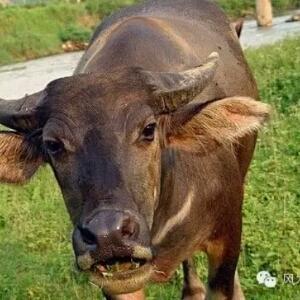 青松是什么动物