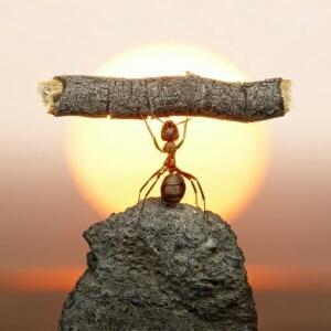 迷途的蚂蚁