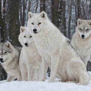 全球十大最嗜血动物