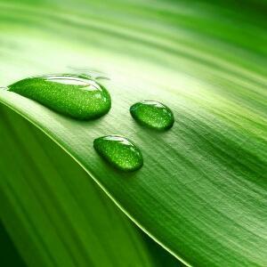 背景 壁纸 绿色 绿叶 树叶 植物 桌面 300_300