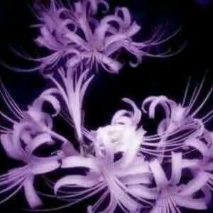 紫幽伊人在盛夏