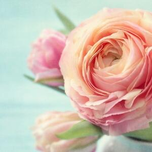 冰蓝的蔷薇