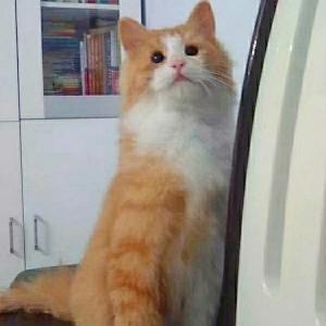 踩到耗子的猫