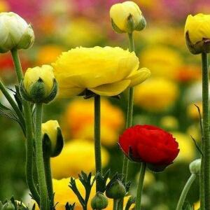 小草朴素芬芳