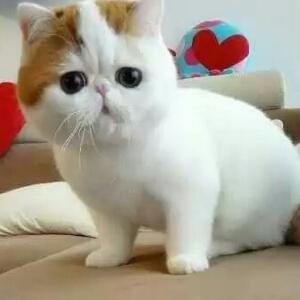 可爱猫咪睡碗里