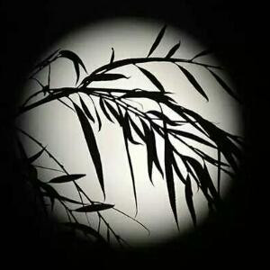 月下的墨竹