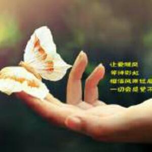 花间一只蝶