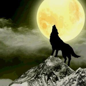 i162369330白狼
