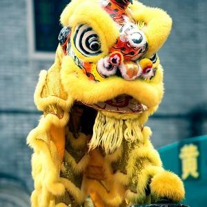 黄色潜水猫