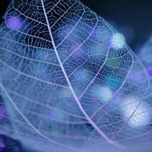 南海紫竹林