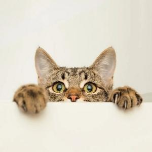 猫咪爱看看