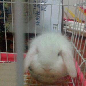 1314我的兔