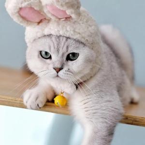 儒雅的大才猫