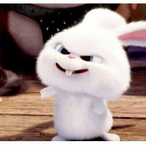 不想说话的兔子