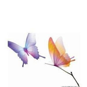 紫姿天使木兰