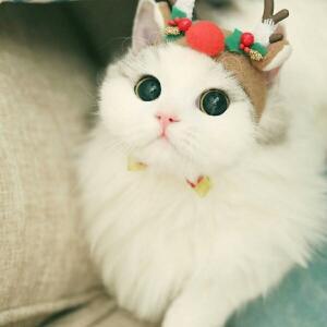 纯洁小kitty