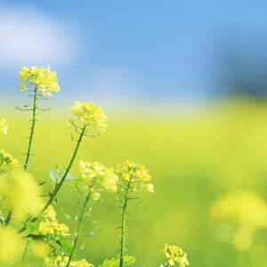 飘零的花瓣