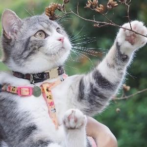 貓貓文學館