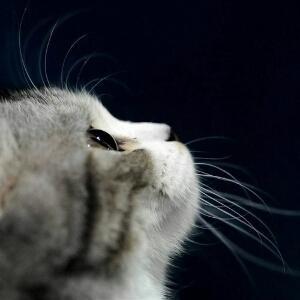 猫咪的笑傲江湖