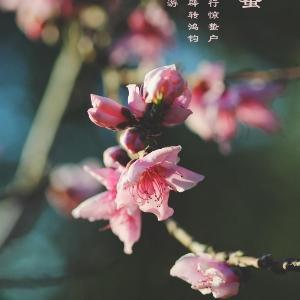 木槿花开1980