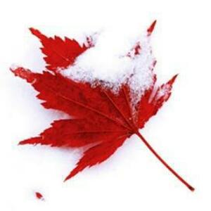 冰雪爱上树叶