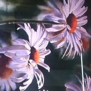 花开满世界