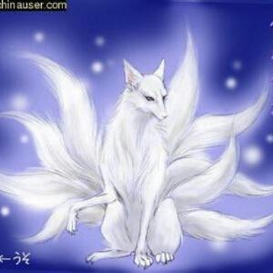 善良da狐狸