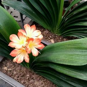 朵朵i595552388
