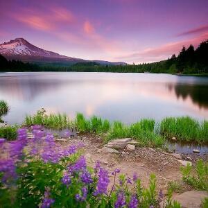 梦幻的紫色