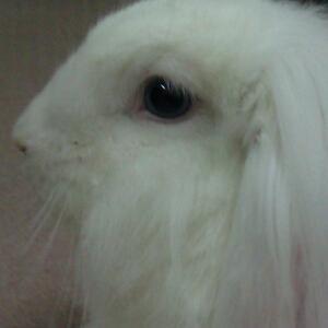 美兔掌上阅
