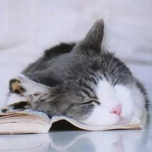 慵懒的猫小姐