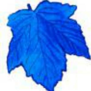 2010蓝树叶